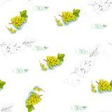 Illustration d'aquarelle d'un raisin Photographie stock