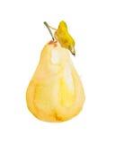 Illustration d'aquarelle d'une poire Photos stock