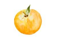 Illustration d'aquarelle d'une pomme Photographie stock libre de droits