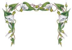 Illustration d'aquarelle de cadre de fleurs photographie stock libre de droits