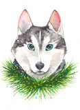 Illustration d'aquarelle de chien hysky Photographie stock libre de droits