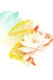 Illustration d'aquarelle de fleur illustration stock
