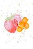 Illustration d'aquarelle des baies Images libres de droits