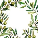 Illustration d'aquarelle des branches d'olivier Illustration de Vecteur