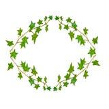 Illustration d'aquarelle des feuilles des étoiles illustration libre de droits