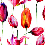 Illustration d'aquarelle des fleurs de tulipes Images stock