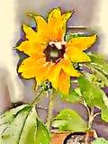Illustration d'aquarelle du vase de fleurs colorées Photos libres de droits
