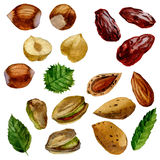 Illustration d'aquarelle Ensemble d'écrous et de dates Pistaches, amandes, noisettes et dates Images stock