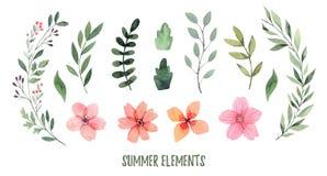 Illustration d'aquarelle Feuillage d'été Collection botanique de illustration de vecteur