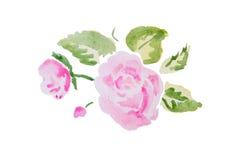 Illustration d'aquarelle d'une fleur Photos libres de droits