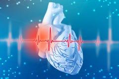 illustration 3d av den mänskliga hjärta och kardiogrammet på futuristisk blå bakgrund Digitala teknologier i medicin arkivfoto