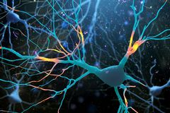 illustration 3D av den mänskliga nervcellstrukturen Royaltyfria Foton