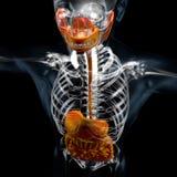 illustration 3d av digestivkexsystemet, x-stråle stock illustrationer
