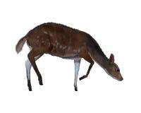illustration 3d av en hjort royaltyfri illustrationer
