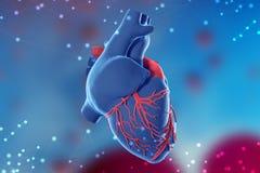 illustration 3d av mänsklig hjärta på futuristisk blå bakgrund Digitala teknologier i medicin royaltyfria foton