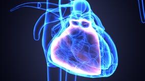 illustration 3d de l'anatomie de coeur de corps humain illustration stock