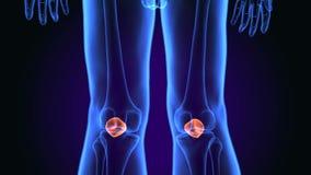 illustration 3d de l'anatomie d'os de petella de corps humain illustration de vecteur