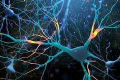 illustration 3D de structure humaine de cellules nerveuses Photos libres de droits
