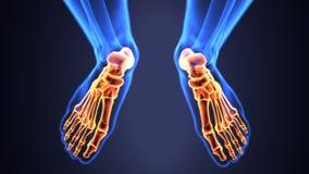 Illustration 3d der skeleton Fußknochenanatomie Lizenzfreie Stockfotos