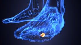 Illustration 3d der skeleton Fußknochenanatomie Lizenzfreies Stockbild
