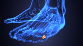 Illustration 3d der skeleton Fußknochenanatomie Lizenzfreie Stockfotografie