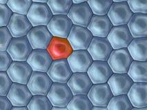 Illustration 3d einer Frontansicht auf Zellmuster mit auf roter Zelle Stockfoto