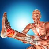 Illustration 3d einer männlichen Anatomie Doktor Bandaging Man Ankle vektor abbildung