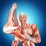Illustration 3d einer männlichen Anatomie Doktor Bandaging Man Ankle lizenzfreie abbildung