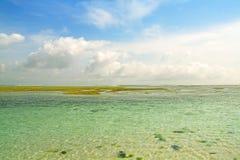 Illustration d'horizontal du récif coralien Photo stock