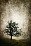 Illustration d'isolement de concept de cru d'arbre Photos stock