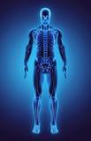 Illustration 3D Teil des menschlichen Skeletts, medizinisches Konzept lizenzfreie abbildung