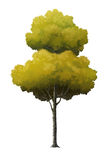 Illustration d'un arbre Photos stock