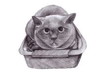 Illustration d'un chat britannique de crayon dans un plateau illustration libre de droits