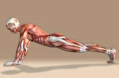 illustration 3d d'un chiffre masculin médical exercice Image libre de droits