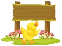Conseil et canard Photos stock