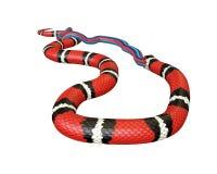 illustration 3D d'un Roi Snake Swallowing de la Californie un serpent de rouge bleu Images libres de droits