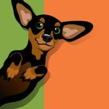 Illustration d'un teckel espiègle heureux illustration stock