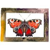 Illustration d'une aquarelle de Nymphalidae de papillon illustration libre de droits