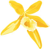 Illustration d'une fleur jaune de la vanille Photos libres de droits