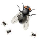 Illustration d'une mouche domestique Image stock