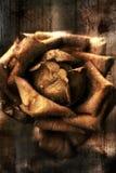 Illustration d'une rose Photo stock