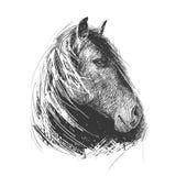 Illustration d'une tête de cheval, faite dans le style de la gravure sur bois Photos libres de droits