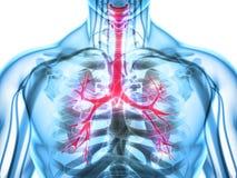 Illustration 3D von Kehlkopf-Trachea-Bronchien Lizenzfreies Stockfoto