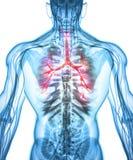 Illustration 3D von Kehlkopf-Trachea-Bronchien Lizenzfreies Stockbild