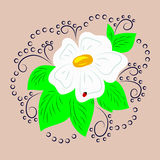 Illustration daisy, color Royalty Free Stock Images
