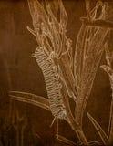 Illustration dans la sépia d'un plexippus de Danaus de Caterpillar de papillon de monarque sur le Milkweed dans un pré dans le Co photos libres de droits