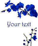 Illustration with dark blue orchids. Stock Photo
