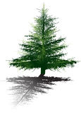 Illustration with dark fir and shadow. Illustration with green fir  on white background Royalty Free Stock Photo