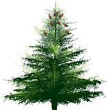 Illustration with dark green fir. Illustration with green fir isolated on white background Royalty Free Stock Images