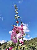 Illustration de bande dessinée de stupéfier la fleur rose avec le symbole de fond de ciel bleu de l'espoir, de la liberté et de l photographie stock